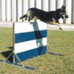 Curso e vídeo grátis sobre adestramento canino
