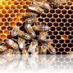 Entenda os honeypots – Segurança de redes