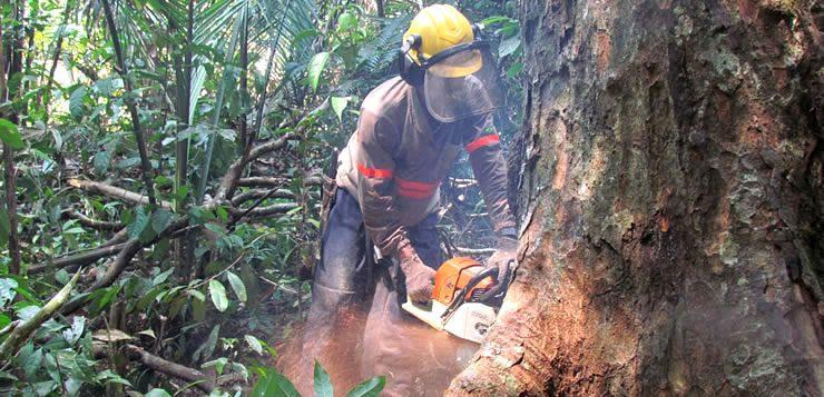 A função de madeireiro é uma das profissões mais perigosas do mundo