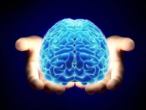 Temos dentro de nosso crânio a mais fabulosa máquina orgânica de processamento já vista. Porque não a usamos de forma decente?