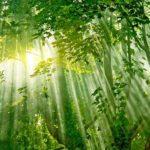 5 projetos de florestas futuristas