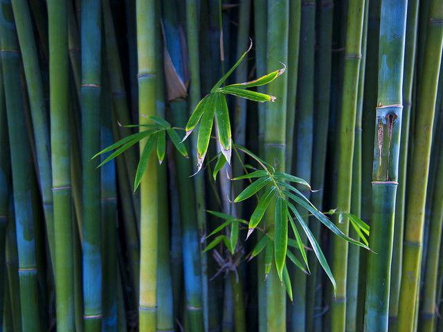 Bamboo - papel de parede para pc