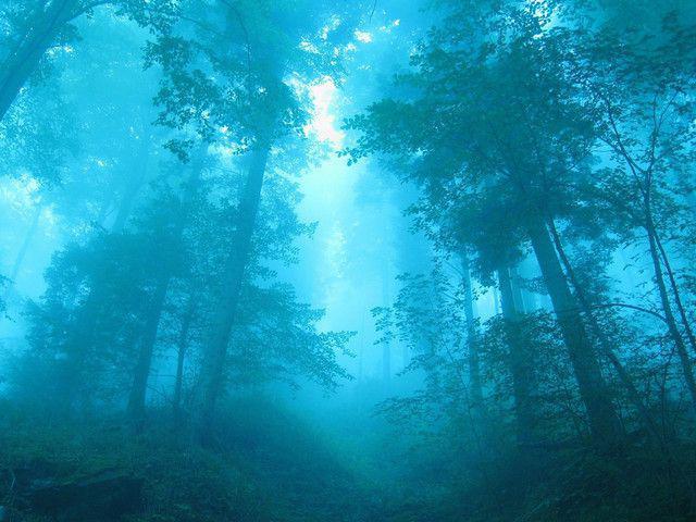 Blue Forest - papel de parede para pc