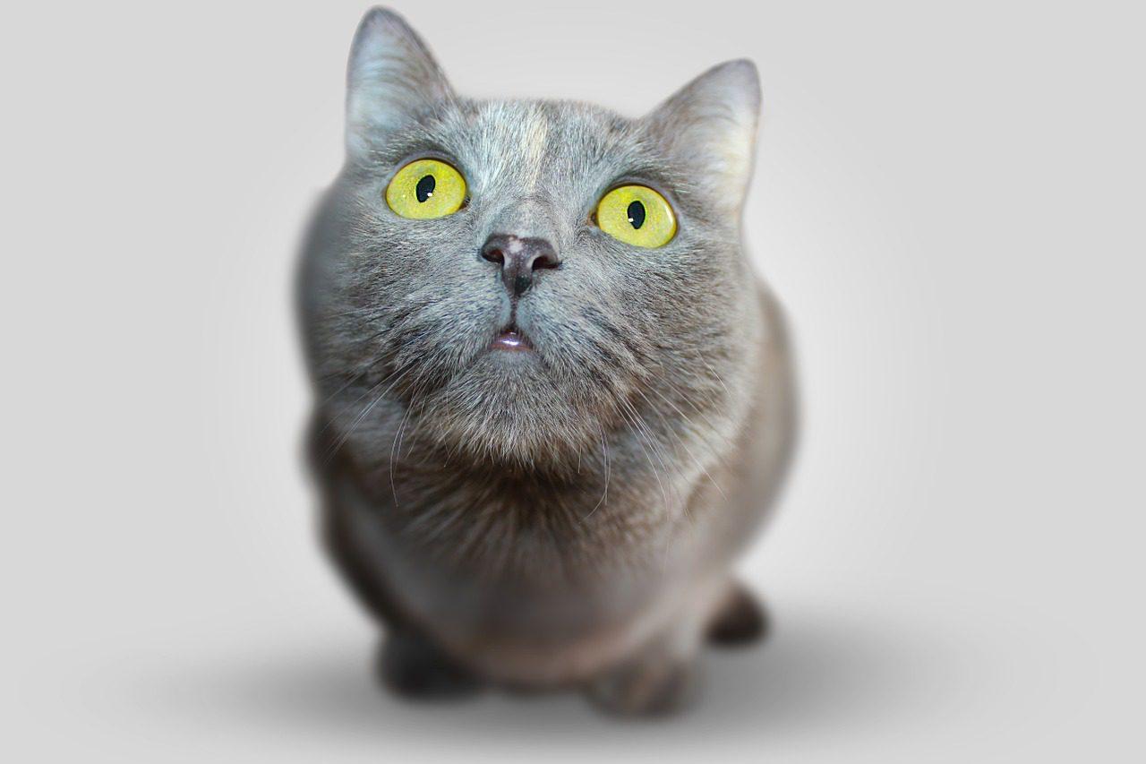 gato 7 vidas
