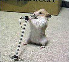 japoneses criam rato canta igual a um passarinho