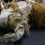 Japoneses querem trazer mamutes de volta a vida