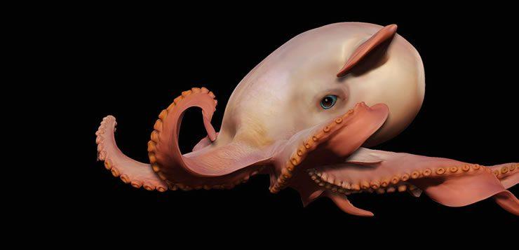 Com barbatanas membranares na cabeça, o polvo-dumbo é um dos animais marinhos mais exóticos